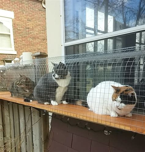 cat enclosures diy another awesome outdoor cat enclosure cuckoo4design
