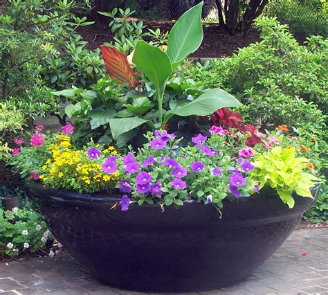 container gardening containers with pizazz not your ordinary container