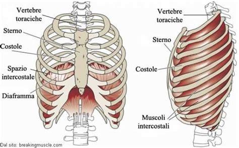 gabbia toracica ossa costole o coste