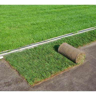 trawa  rolki   najlepsze trawy  ilawy trawa