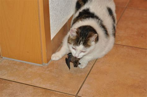 Was Ist Eine Maus by Auch Eine Fledermaus Ist Eine Maus Foto Bild Tiere