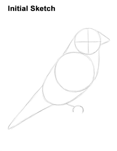 how to draw a goldfinch how to draw a goldfinch