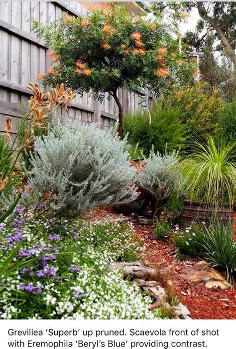 best 25 australian garden design ideas on