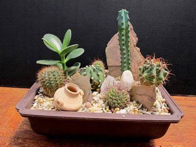 Yet Another Delight Jardin Dulysse by 25 Trending Mini Cactus Plants Ideas On