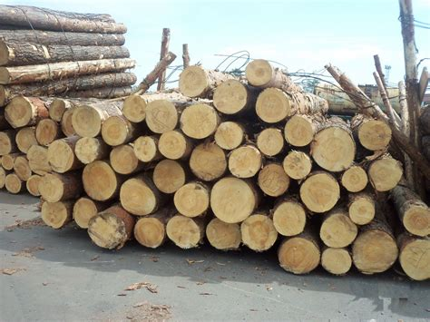 Lemari Kayu Sengon cara mengawetkan kayu sengon agar tahan jamur kayu