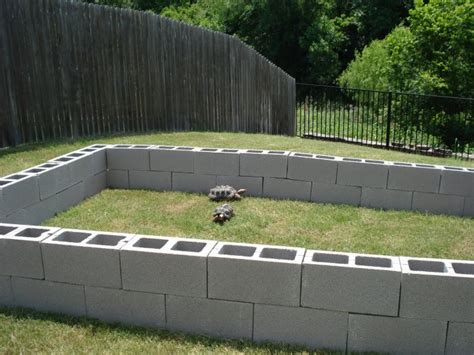 backyard turtle habitat tips interesting sulcata tortoise habitat for outdoor pet