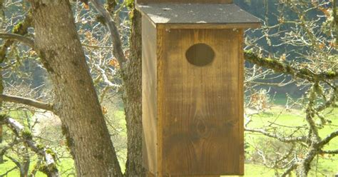pattern for wood duck box wow our wood duck box made the top 10 favorite boxes on