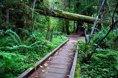 Douglas County Oregon Records File Fall Creek Falls Trail Douglas County Oregon Scenic Images Douda0211a Jpg