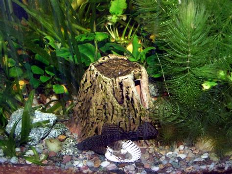 fish aquarium decorations an article and discussion about decorating fish tanks