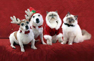 imagenes graciosas de animales en navidad fotos perros disfrazados por navidad fotos v 237 deos