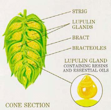 the science hops part 2 essential oils craft