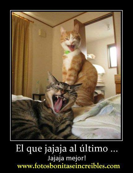 imagenes mamonas para un amigo fotos divertidas de gatos imagenes de gatos con frases