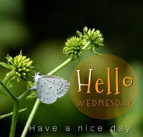 Morning Wednesday Pictures