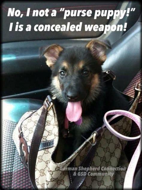 Funny German Shepherd Memes - law enforcement today www lawenforcementtoday com the