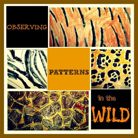 patterns in nature art activities 36 best animal adaptations teaching unit images on