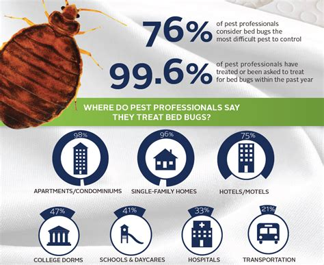 bed bug treatment  vancouver  kill bed bugs