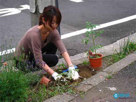 Guerilla Gardening by Guerilla Grow Misterspliffy