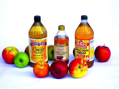 apple cider vinegar and dogs apple cider vinegar whole journal