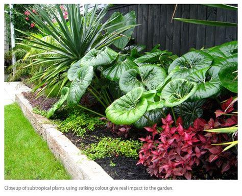 Subtropical Garden Ideas Subtropical Garden Design Search Landscaping Ideas Pinterest Search