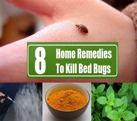 home remedies for getting rid of bed bugs bed bugs bites