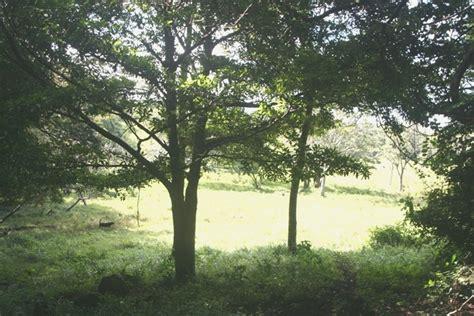 hängematte zu verkaufen zu verkaufen 16 ha farm bei arenal tenorio zentral nord