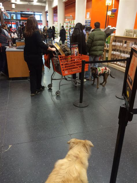 The Home Depot Tallahassee Fl by Are Dogs Allowed At Home Depot Pets Mostly Welcome In Stores But Follow The 6abc Friendly