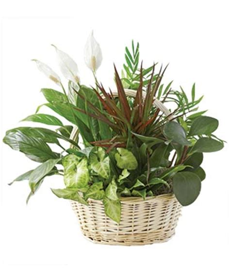 common house plants for funerals classic dish garden at from you flowers
