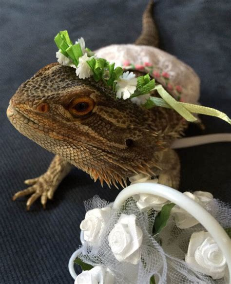 awesome bearded dragon costumes