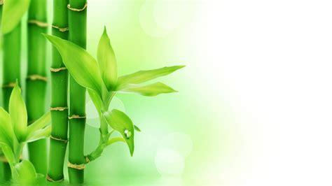 wallpaper daun full hd 清新绿色竹林护眼高清图片桌面主题壁纸 风景壁纸 壁纸下载 美桌网