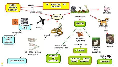 alimentazione animali mapper nutrizione vertebrati