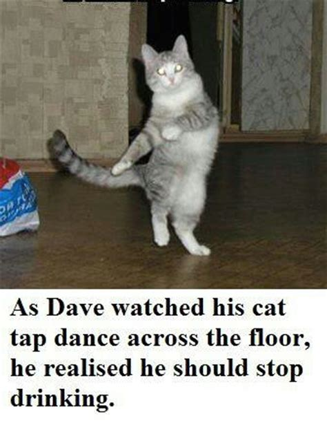 Sexy Cat Memes - tap dancing cat funny animals pinterest sexy cats