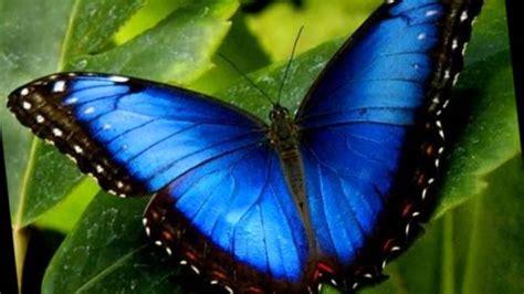 imagenes una mariposa la metamorfosis de una mariposa youtube