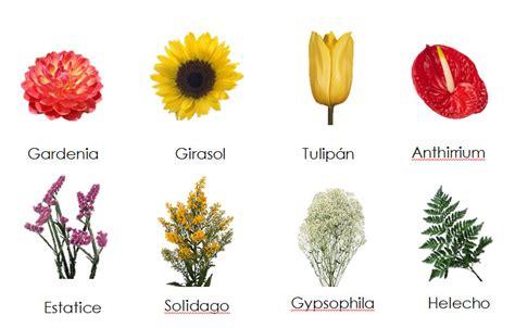todo mujer rosas con nombres de mujer s z diferentes tipos de flores y sus nombres 1 esther de