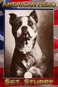 Sgt Stubby Bio An American Legend Outspoken Graphics