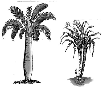 awaludin asiyanto tumbuhan hijau
