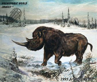 Animal During Great Ice Age | coelodonta wooly rhino pleistocene epoch