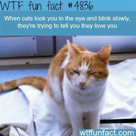 Cat Facts Meme - 25 best ideas about fun facts on pinterest interesting