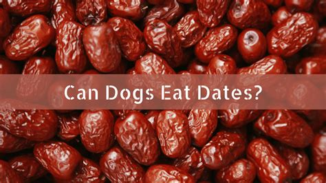 can dogs eat dates can dogs eat dates smart owners