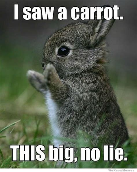 Cute Baby Animal Memes - what s in the quot war room quot warrior forum the 1 digital