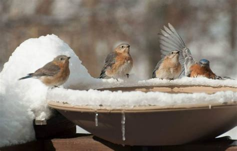 winter birds what the birds want you to know southern