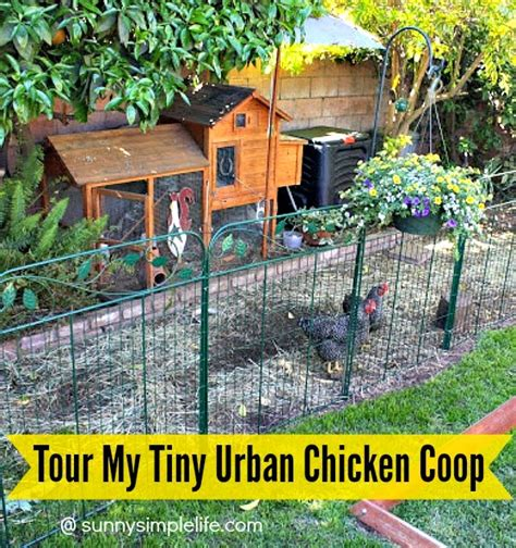 can i have chickens in my backyard sunny simple life tour of my tiny chicken coop