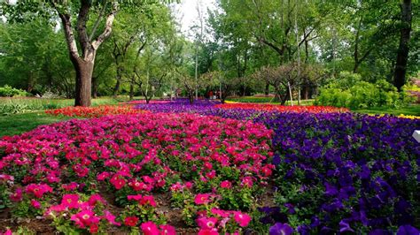 stunning flower landscape wallpaper 1366x768 7561