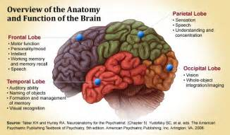 brain lobes and what they do nursing