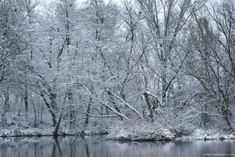 image gallery snow trees