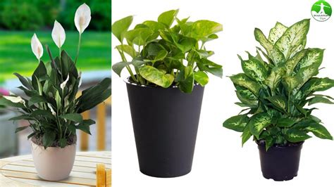 indoor plants for cats tropical house plants toxic to cats