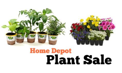 home depot plant sale annuals for 1 southern savers