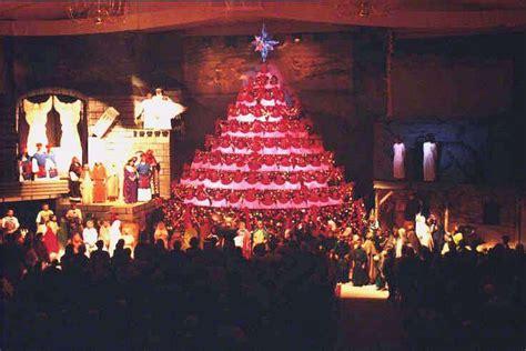 shaw living christmas tree 2 100 live christmas trees