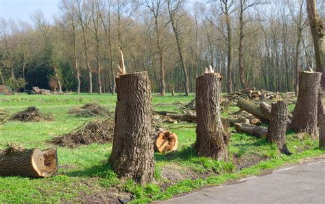 cut down your own tree in md utterly stunning facts about biomass energy