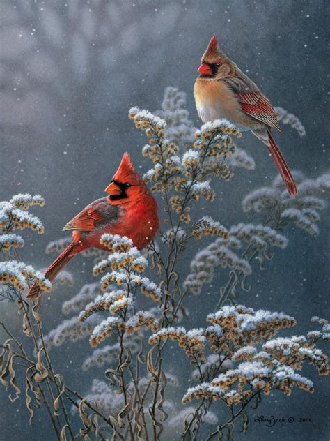 winter cardinals on goldenrod larry zach wildlife art