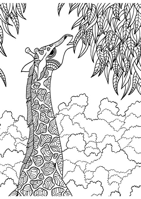 giraffe coloring page for adults giraffe adult colouring page colouring in sheets art